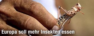 Finger halten eine frittierte Heuschrecke