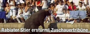 Stier springt in Zuschauertribüne