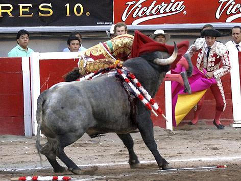 Torero Jose Tomas wird von Stier attackiert