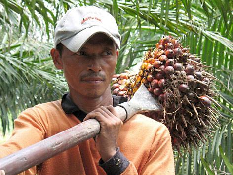 Mann mit Palmölernte