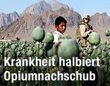 Mohnfeld in Afghanistan