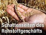 Eine Hand hält eine Weizenähre