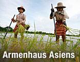 Arbeiterinnen auf einem Reisfeld