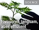 Die Silhouette einer Hand greift nach einer Pflanze