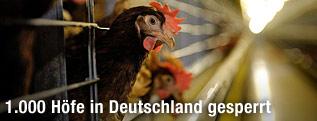 Hühnerlegebatterie