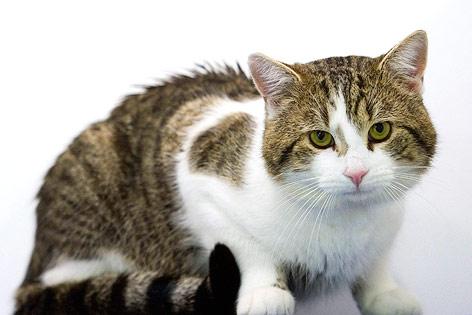 Downing-Street-Katze Larry
