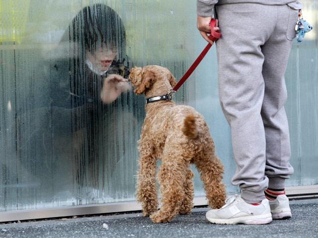 Unter Quarantäne gestelltes Mädchen begrüßt Hund durch Glasscheibe
