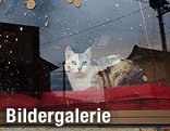 Katze auf Fensterbrett