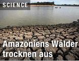 Trockenheit im Amazonas