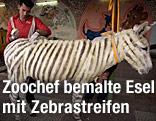Zoochef bemalt Esel mit Zebrastreifen