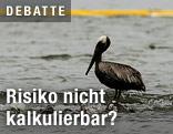 mit Öl verschmutzter Pelikan
