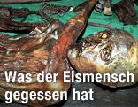 """Die Gletschermumie """"Ötzi"""" kurz nach ihrem Fund 1991"""
