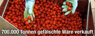 Tomaten werden überprüft