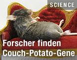 Maus auf einer Couch