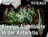 Satellitenfoto des Algenteppiches in der Antarktis