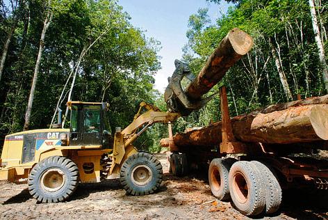 Baumstämme aus dem Amazonas-Regenwald in Brasilien werden auf einen Lkw geladen
