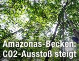 Baumkronen im Regenwald