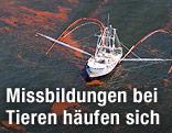 Ölpest im Golf von Mexiko
