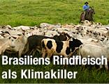 Brasilianische Rinderherde