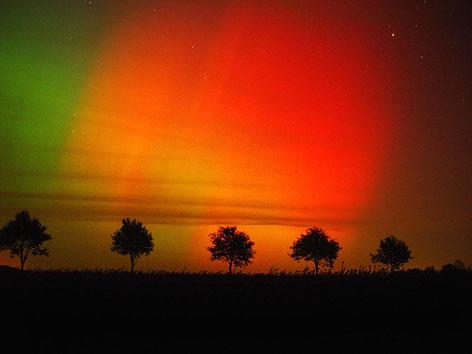 Ein Nordlicht-Farbenspiel hinter einer Allee von Bäumen