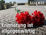 Rote Rosen auf Gedenkstätte bei Wolgograd