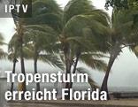 Palmen im Sturm