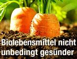 Zwei Karotten wachsen aus der Erde