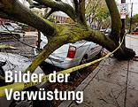 Umgestürzter Baum liegt auf Autos in South Philadelphia