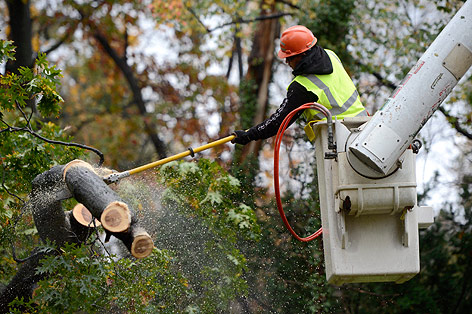 Arbeiter sägt Ast von Baum ab