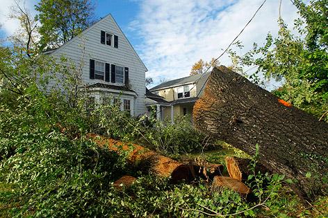 Umgestürzter Baum in Silver Spring (US-Bundesstaat Maryland)