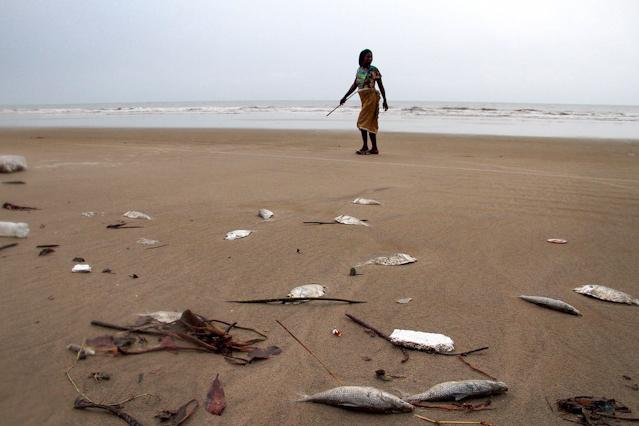 Tote Fische am Strand