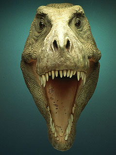 """Der Tyrannosaurus Rex """"Sue"""" als Computer-Rekonstruktion"""