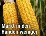 Genmanipulierter Mais