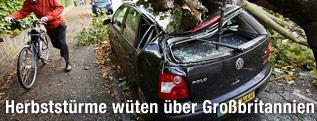 Durch umgestürzten Baum zerstörtes Auto