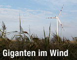 Windrad im Burgenland
