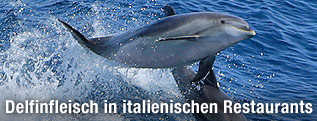 Delfine im Meer