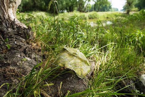 Plastikmüll im  Nationalpark Donauauen bei Schönau an der Donau