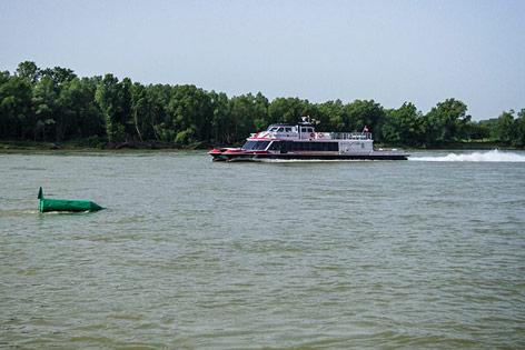 Twincityliner auf der Donau Richtung Bratislava nahe dem Nationalpark Donauauen bei Schönau an der Donau