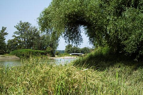 Nationalpark Donauauen bei Schönau an der Donau