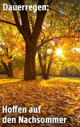 Sonne scheint durch Herbstblätter durch