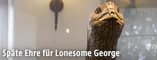 Ausgestopfte Schildkröte Lonesome George im Museum
