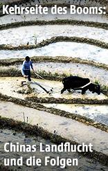 Chinesischer Landwirt auf einem Reisfeld
