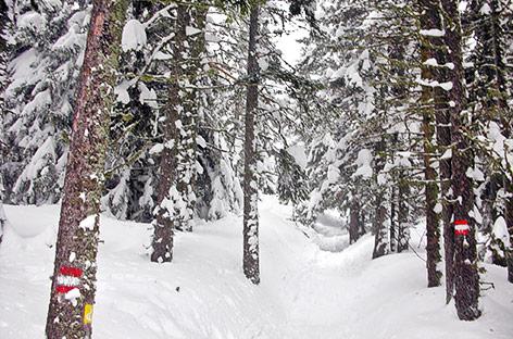 Verschneite Winterlandschaft am Wechsel