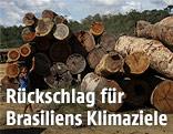 Abgeholzte Baumstämme aus dem Regenwald