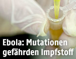 Ebola Impfstoff im Labor
