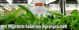 Laborantin hinter gezüchtetem Salat