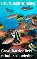 Fische vor Korallenriff