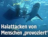 Haie schwimmen unter einem Boot