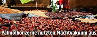 Frau trocknet Palmölfrüchte