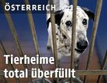 Hund in einem Tierheim im Hundezwinger